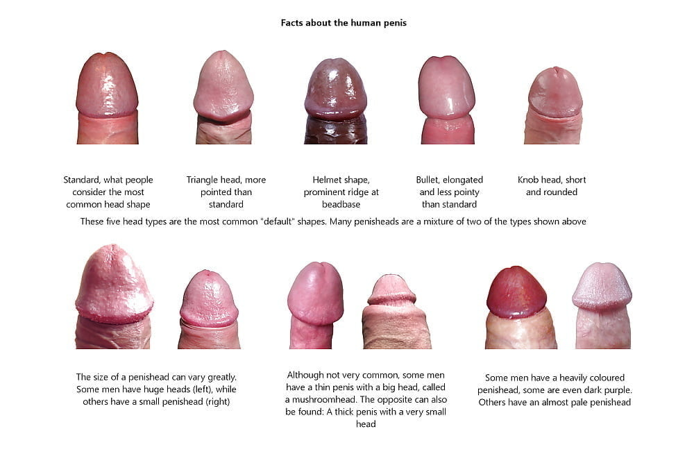 There are seven different penis shape which does your partner have
