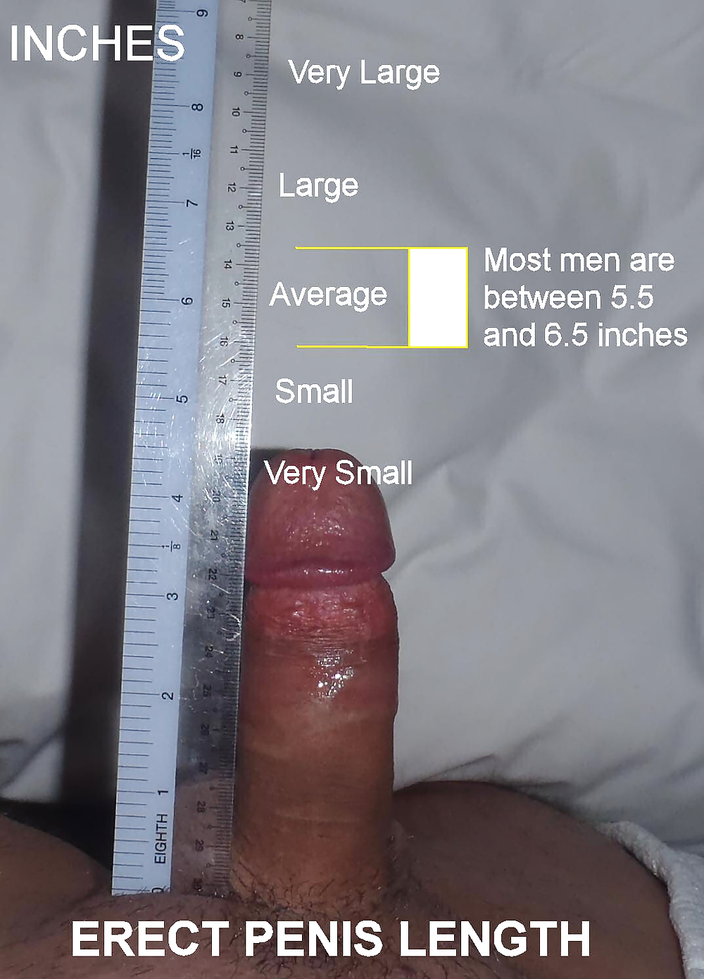 How does an average man's penis compare to a horse penis in size