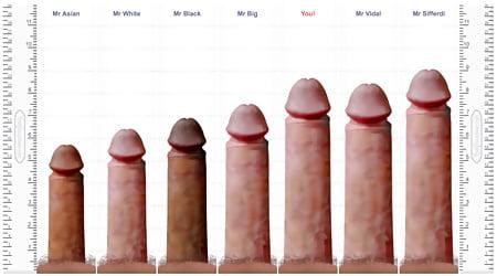 pornstar penis Average